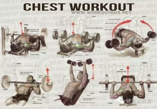 背部训练动作