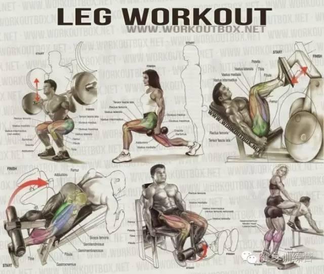 肱二头肌训练动作