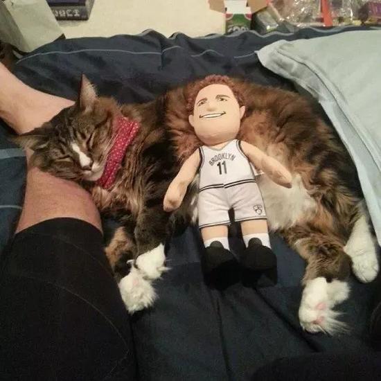 大部分NBA球员都养猫,哈登厉害了!他养猫女郎 NBA新闻 第4张