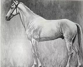 """白马王子的""""白马""""到底是什么马?"""